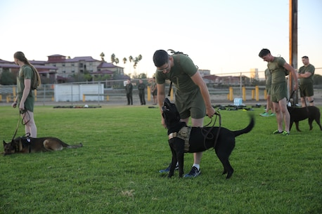 Marines and military working dogs with I Marine Expeditionary Force Headquarters Group prepare for a motivational run at Marine Corps Base Camp Pendleton, Calif., Nov. 10, 2016. The run was done in celebration of the 241st birthday of the United States Marine Corps. On Nov. 1, 1921, General John A. Lejeune, 13th Commandant of the Marine Corps, directed that Marines throughout the globe would celebrate their traditions on the Marine Corps Birthday, Nov. 10.  (U.S. Marine Corps photo by Pfc. Robert Bliss)