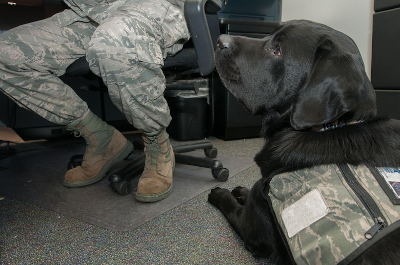 Luke, a service dog, lies at the feet of Staff Sgt. Ryan Garrison as he completes work at the Defense Courier Station-Baltimore on Fort Meade, Md., March 29, 2016. Luke goes everywhere with Garrison to assist in the Airman's recovery from a combat-related injury. (U.S. Air Force photo/Sean Kimmons)