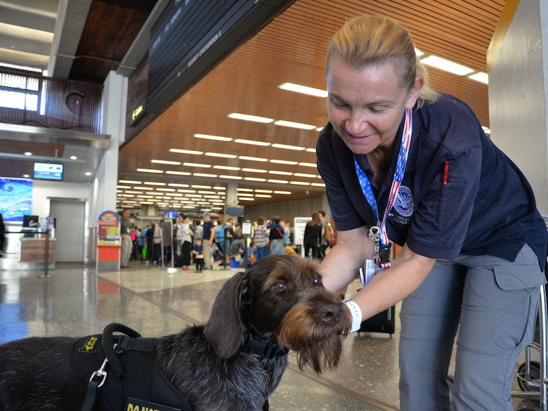 U.S. Air Force Senior Master Sgt. Tara Corse, a member of the Air Force Reserve's 48th Aerial Port Squadron, works as the Regional K-9 training instructor at the Honolulu International Airport, Hawaii, Nov. 16, 2016. Corse's civilian career and her position in the 48th APS correlate because they are both in the field of airport security and operations. The 48th APS supports the 624th Regional Support Group's mission to deliver mission essential capability through combat readiness, quality management and peacetime deployments in the Pacific area of responsibility.(U.S. Air Force photo by Master Sgt. Theanne Herrmann)