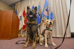 Service dog trainees Kharma and Lucy watch the audience arrive for the Hart-Dole-Inouye Federal Center's People With Disabilities event on how such companions help combat veterans cope with post-traumatic stress disorder.