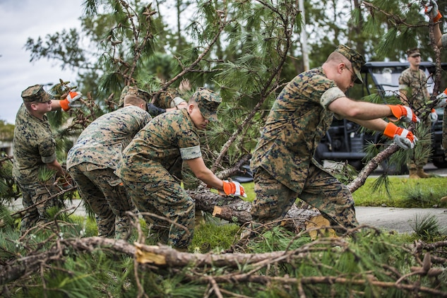 Marinesremove a part of a tree from a main road aboard Marine Corps Air Station Beaufort Oct. 8. Marines and sailors with MCAS Beaufort worked to return the air station and Laurel Bay to normal operations. They removed debris and cleaned up main access roads to establish infrastructure after Hurricane Matthew.