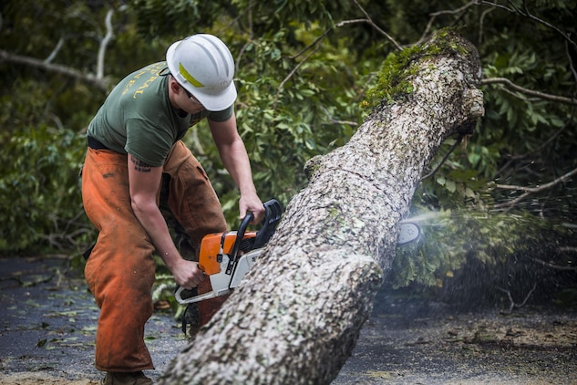 A Marine cuts a fallen tree at a main road aboard Marine Corps Air Station Beaufort Oct. 8. Marines and sailors with MCAS Beaufort worked to return the air station and Laurel Bay to normal operations. They removed debris and cleaned up main access roads to establish infrastructure after Hurricane Matthew.