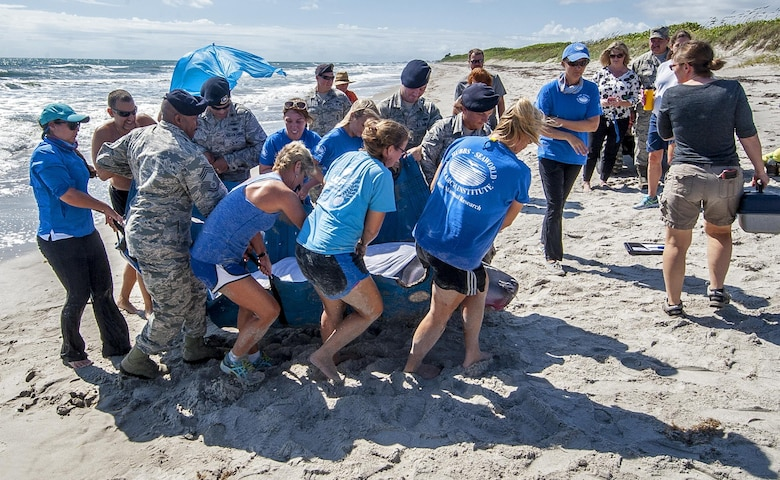 Patrick Air Force Base and Sea World personnel team up to help a  sick whale Sept. 7, which led Air Force Reservist Tech. Sgt. Bridget Gayden, 920th Rescue Wing Security Forces Airman, to become a Sea World volunteer to help sick animals.(U.S. Air Force photo Master Sgt. Paul Flipse)