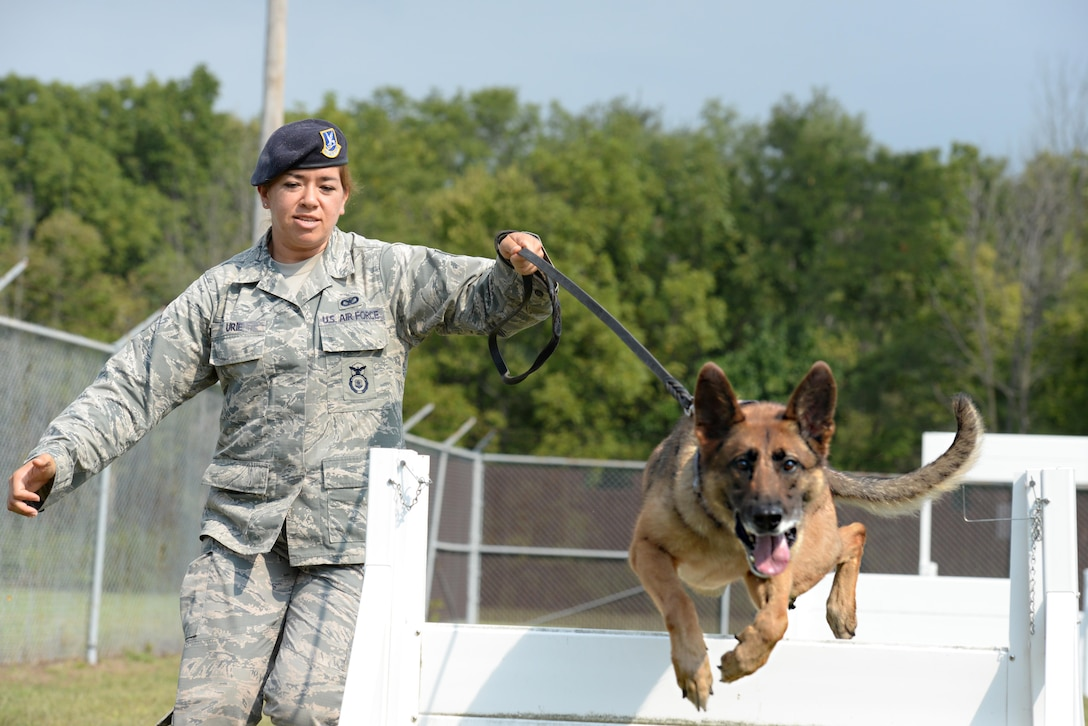 "Military Working Dog ""Ruth"" is put through a standard obstacle course work out by her trainer U.S. Air Force Staff Sergeant Amanda Urie, 88th Security Forces Squadron working dog handler, Wright-Patterson Air Force Base, Sept. 14, 2016. Military working dogs play a vital role in assisting security force personnel with the security, interdiction and capture of criminal elements in their line of duty. (U.S. Air Force photo/Al Bright)"