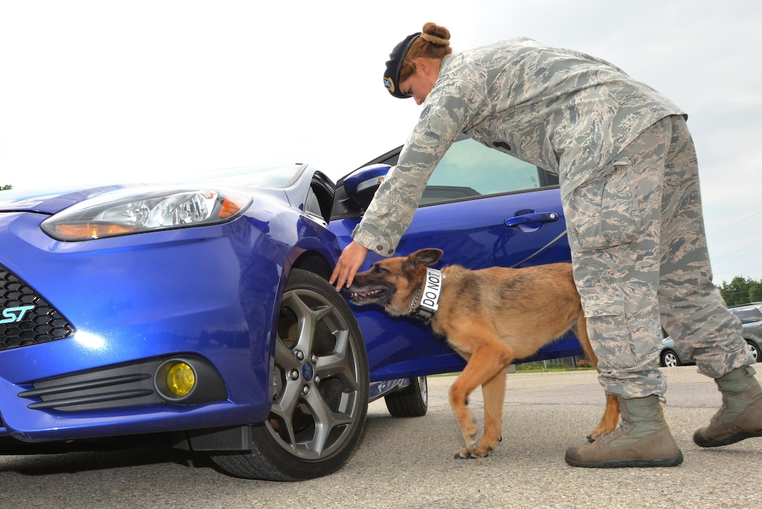 """U.S. Air Force Staff Sergeant Amanda Urie, 88th Security Force Squadron Working Dog Handler, directs """"Ruth"""", a military working dog, to seek drug contraband or explosive materiel on a vehicle at Wright-Patterson Air Force Base Sept. 14, 2016. Military working dogs provide service in drug and explosives detection, sniffing out a broad range of substances despite efforts at concealment. (U.S. Air Force photo/Al Bright)"""