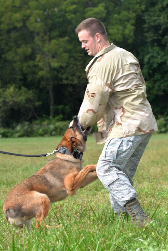 """Military Working Dog """"Ruth"""" attacks and subdues """"decoy"""" U.S. Air Force Senior Airman Jacob Coffman, 88th Security Forces Squadron, military working dog handler, during training at Wright-Patterson Air Force Base, Ohio, Sept. 14, 2016.  K-9 police dogs can chase suspects, track them if they are hidden, and guard them when they are caught. (U.S. Air Force photo/Al Bright)"""