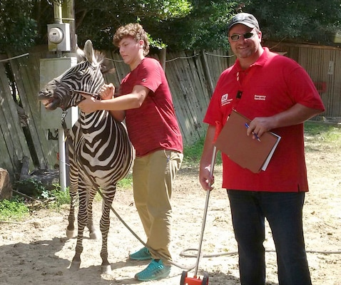 While inspecting a foundation in Louisiana, Clay Weisenberger of the U.S. Army Engineering and Support Center, Huntsville's Office of Council, came face-to-face with a zebra.  Weisenberger is a member of Huntsville Center's Housing Planning and Response Team, deployed to Louisiana to support flood recovery in Baton Rouge.
