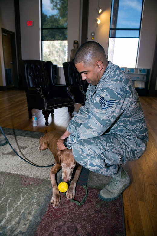 Staff Sgt. Anthony Cruz, 23d Security Forces Squadron Military Working Dog handler, attaches a retirement pin on retired MWD Dini's collar during his retirement ceremony, Oct. 28, 2016, at Moody Air Force Base, Ga. Cruz says that Dini will surely be missed, but wishes him the best of luck as he transitions into life as a pet. (U.S. Air Force photo by Airman 1st Class Greg Nash)