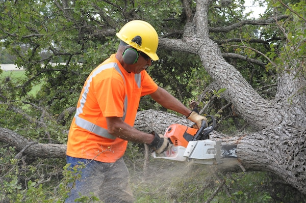 Herman Hernandez, cuts down a tree at Heritage Park, Aug. 30, 2016 Joint Base San Antonio-Randolph. Trees are removed to reduce nesting areas for birds that strike aircraft.