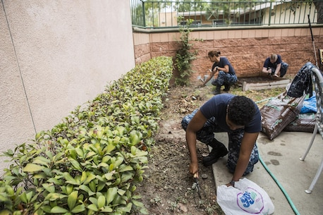 Sailors with USS America (LHA 6) work in a garden during a volunteer event for the United States Veterans Initiative, a nonprofit organization that assists homeless veterans, Sept. 2, 2016, in Long Beach, Calif. Marines, Sailors and Coast Guardsmen, visited the facility where hundreds of homeless veterans live and receive assistance and care. The visit was one of many community service projects that took place during the first Los Angeles Fleet Week. (U.S. Marine Corps photo by Sgt. Rick Hurtado)