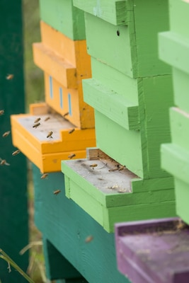 The Charleston District became the first federal agency in South Carolina to begin a bee pollinator program. President Obama and the Corps have begun initiatives to keep pollinators going in the country.