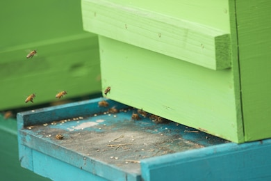 New BEE-ginnings at St. Stephen