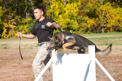 Marine Corps Sgt. Shawn Eden, Quantico Canine Unit, and his working dog Segal participate in an iron dog competition Oct. 23, 2015, at Marine Corps Base Quantico, Va. The competition included a dummy drag, an agility course, a firearm event, a tactical obedience test and a two-mile run, Army photo by Sgt. Ida Irby