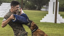 U.S. Marine Lance Cpl. Matthew Byrd, dog handler, Provost Marshall's Office, K9 Section, Marine Corps Base, Camp Smedley D. Butler, catches Military Working Dog Bbutler while decoying as an aggressor during training aboard Kadena Air Force Base, Okinawa, Japan, Sept. 6, 2016. MWD's are trained to subdue or intimidate suspects before having to use lethal force; they are also used for detecting explosives, narcotics, and other harmful materials.