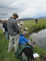 Participants in the wetland plant identification training course listen to instructor Robert Sivinski discuss how to identify a plant during the field trip to New Mexico wetlands, Aug. 17, 2016.