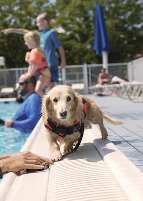 Dogs wait to swim with their owners during the Dog Days of Summer event at Yokota Air Base, Japan, Sept. 10, 2016. The event was held at the Sakana Pool and provided an opportunity for Yokota members to swim alongside their dogs before the pool closed for the summer. (U.S. Air Force photo by Airman 1st Class Donald Hudson/Released)