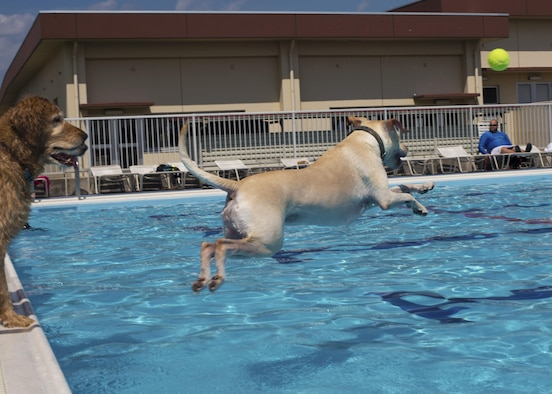 A dog plays fetch with owner in the Sakana Pool during the Dog Days of Summer event at Yokota Air Base, Japan, Sept. 10, 2016. The event provided an opportunity for Yokota members to swim alongside their dogs before the pool closed for the summer. (U.S. Air Force photo by Airman 1st Class Donald Hudson/Released)