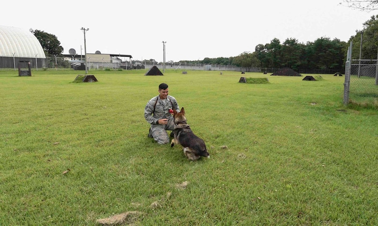 Staff Sgt. Charles Sena, a military working dog handler, plays with his partner, Karo, a MWD, both assigned with the 35th Security Forces Squadron, before agility training at Misawa Air Base, Japan, Sept. 7, 2016. The MWD teams at Misawa conduct daily detection and patrol training to keep them proficient, certified and mission ready. (U.S. Air Force photo by Airman 1st Class Sadie Colbert)