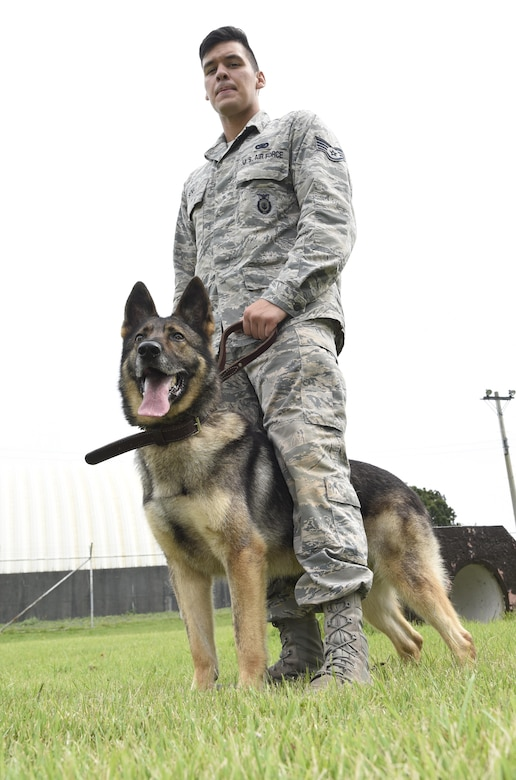 Staff Sgt. Charles Sena, a military working dog handler and Karo, a MWD, both assigned with the 35th Security Forces Squadron, stand together after finishing controlled aggression training at Misawa Air Base, Japan, Sept. 7, 2016. To be selected as a MWD, the K-9s are chosen at birth or a young age and go through their own rigorous training at Lackland Air Force Base, Texas. (U.S. Air Force photo by Airman 1st Class Sadie Colbert)