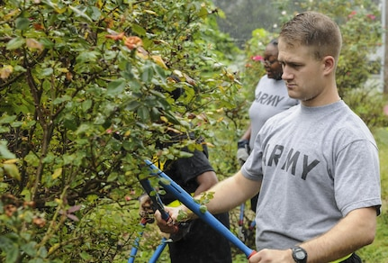Army Spc. Greyson Oswalt-Smith, an intelligence analyst of the G2, 335th Signal Command (Theater), prunes rose bushes to help the non-profit organization Keep East Point Beautiful at Sumner Park in East Point, Georgia Sept. 17, 2016. The 335th SC (T) regularly engages in community events such as assisting Keep East Point Beautiful prune, groom and clean up the area as part of the Keep America Beautiful rose garden project which is in it's 25th year. (U.S. Army photo by Sgt. Stephanie A. Hargett) (Released)