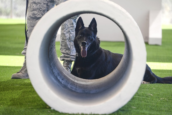 U.S. Air Force military working dog, Lana, assigned to the 355th Security Forces Squadron at Davis-Monthan Air Force Base, Ariz., relaxes after completing obedience training at the new MWD facility March 16, 2017. MWDs and their handlers support the Department of Defense, other government agencies and allies through training, logistical, veterinary support and research and development for security efforts worldwide. (U.S. Air Force photo by Airman 1st Class Giovanni Sims)