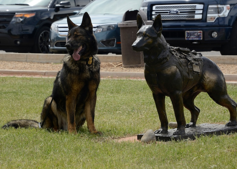 Chrach, 56th Security Forces Squadron military working dog, poses next to a statue dedicated to his service in Fowler Park at Luke Air Force Base, Arizona, April 7, 2017. Chrach is a 9 year old German Sheppard who earned numerous awards and medals for his actions while deployed overseas. (U.S. Air Force photo by Senior Airman Devante Williams)