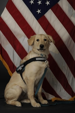 Tessa, the Air Force's first Sexual Assault Prevention and Response K-9, poses for an official photo April 6, 2017, at Eielson Air Force Base, Alaska. Tessa's main goal is to comfort victims of sexual assault, and is joining the 354th Fighter Wing SAPR office, which has a team of 16 certified victim advocates. (U.S. Air Force photo by Staff Sgt. Ashley Nicole Taylor)
