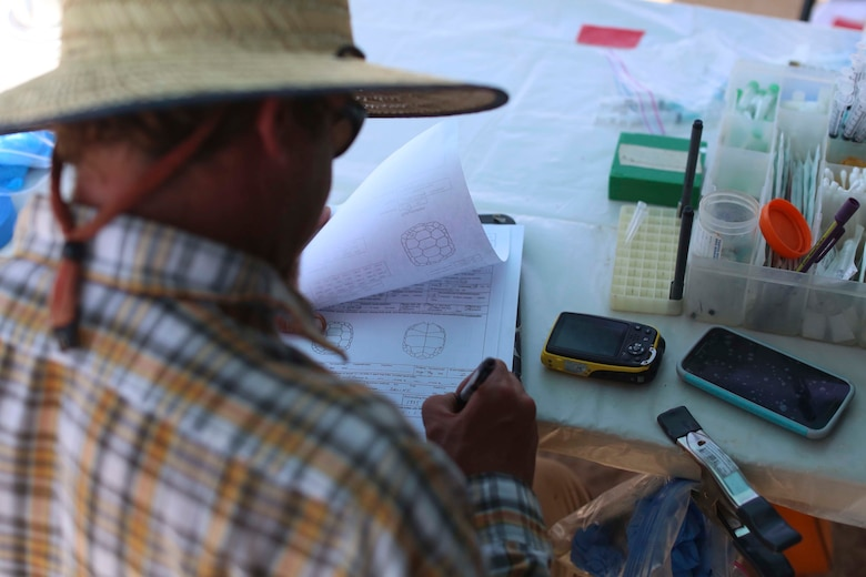 A biologist with Natural Resources and Environmental Affairs, conducts a health assessment during the Desert Tortoise translocation, April 10, 2017, which was facilitated by the Marine Corps Air Ground Combat Center, Twentynine Palms, Calif. The translocation, in accordance with the U.S. Fish and Wildlife Service-signed Biological Opinion, serves as a negotiated mitigation to support the mandated land expansion which will afford the Combat Center the ability to conduct Large Scale Exercise training featuring up to a Marine Expeditionary Brigade-level force. (U.S. Marine Corps photo by Cpl. Medina Ayala-Lo)