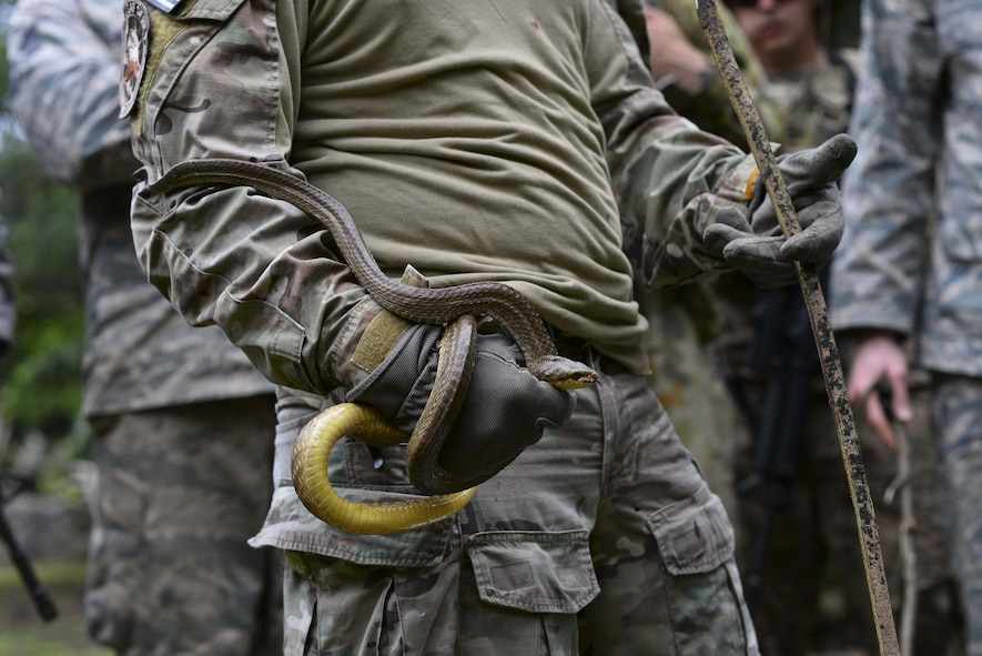 U.S. Air Force Staff Sgt. Andrew Lawrence, a survival, evasion, resistance, and escape instructor, assigned to the 353rd Combat Training Squadron, Eielson Air Force Base, Alaska, holds a snake during Cope North 17 survival training at Andersen AFB, Guam, Feb. 17, 2017. Cope North allowed service members to come together to share jungle survival tactics to enhance interoperability in the event of a survival situation. (U.S. Air Force photo by Airman 1st Class Christopher Quail)