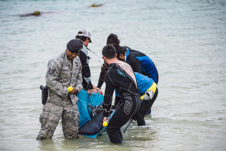 U.S. Air Force Tech. Sgt. Oswaldo Cerrato, 18th Security Forces Squadron flight lead and on-scene commander, helps carry an injured dwarf sperm whale in a stretcher April 17, 2017, at Kadena Marina, Japan. The dwarf sperm whale, known as the smallest species of whale, weighed 330 pounds. (U.S. Air Force photo by Senior Airman Omari Bernard/Released)