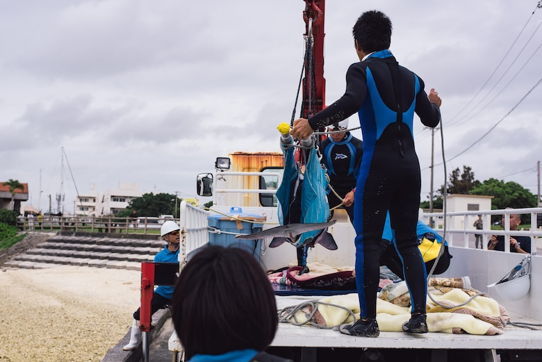 A veterinarian team from the Okinawa Charumi Aquarium loads an injured dwarf sperm whale onto the back of a vehicle April 17, 2017, at Kadena Marina, Japan. The team waited for the whale to stabilize before beginning the hour-long journey to the aquarium where the whale is currently under medical care. (U.S. Air Force photo by Senior Airman Omari Bernard/Released)
