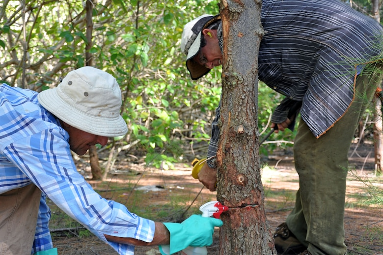"John ""Bird Man"" Gilardi (left), a restoration ecologist, and Mashuri Waite, an ecologist, spray herbicide into the bark of an invasive ironwood tree April 12, 2017 at Wake Atoll. Gilardi and Waite are working to eradicate the invasive tree species. The trees, native to Australia and Indonesia among other regions, create forests where most plants won't grow. This makes for a habitat that is not conducive to the natural open air environment preferred by the native birds of the atoll. The U.S. Air Force, through partnerships with agencies such as the U.S. Fish and Wildlife Service and the National Oceanic and Atmospheric Administration, have worked in recent years to restore Wake Atoll to a more natural habit for its bird population and rid the three islands of invasive plant species. Wake Atoll, made up of the tropical islands of Wilkes, Wake and Peale, is located approximately 2,138 nautical miles west of Honolulu, has a population of roughly 100 residents including Air Force personnel and American and Thai contractors, and is managed by the Pacific Air Forces Regional Support Center under 11th Air Force at Joint Base Elmendorf-Richardson, Alaska."