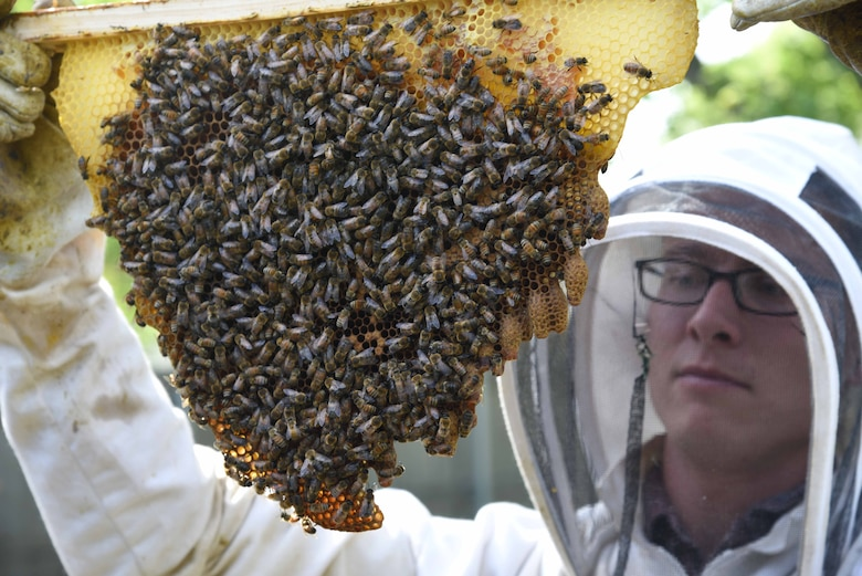 Tech. Sgt. Garrett Wright, 22nd Operations Support Squadron Survival Evasion Resistance and Escape and Personnel Recovery specialist, inspects emergency cells in one of his honeybee hives April 24, 2017, in Derby, Kan. Emergency cells are created by a bee colony to produce a new queen when the previous queen becomes injured, dies or leaves the hive. (U.S. Air Force photo/Airman 1st Class Erin McClellan)