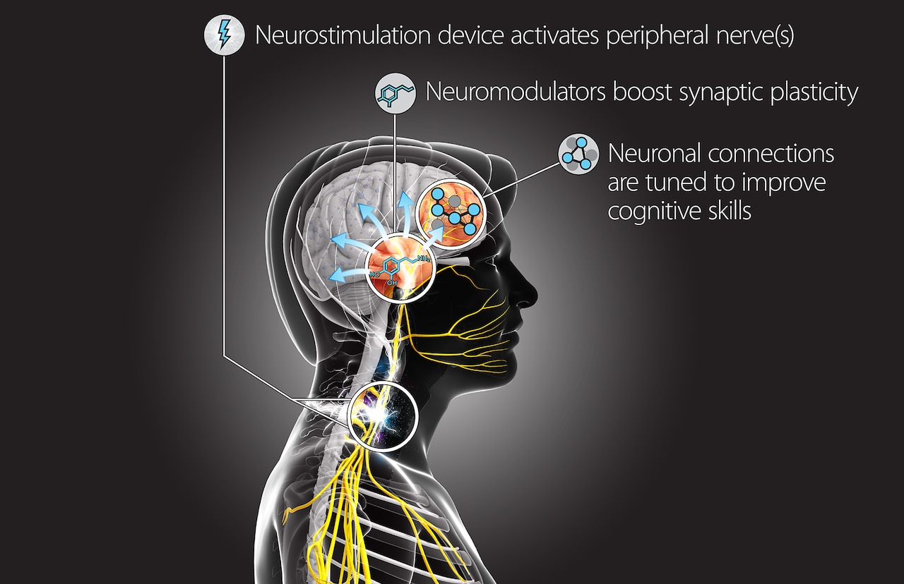 This Targeted Neuroplasticity Training concept diagram demonstrates how the Defense Advanced Research Projects Agency program will explore using peripheral nerve stimulation to enhance learning processes in the brain. DARPA will fund research teams from seven universities and partner with elements of the Air Force and Army to execute the program. DARPA graphic
