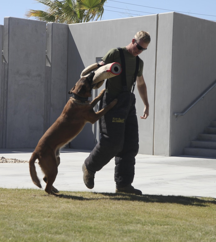 Cpl. Preston Ford, chief trainer, Military Working Dog Section, Provost Marshal's Office, demonstrates how PMO would detain a suspect during the PMO's annual Community Safety Event at Victory Field aboard Marine Corps Air Ground Combat Center, Twentynine Palms, Calif., April 21, 2017. PMO hosted the event to educate the community on various programs and strengthen community based partnerships. (U.S. Marine photo by Lance Cpl. Natalia Cuevas)