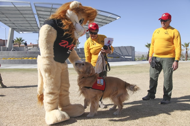 Gunner, golden retriever comfort dog, meets the Drug Abuse Resistance Education Lion during the Provost Marshal's Office annual Community Safety Event at Victory Field aboard Marine Corps Air Ground Combat Center, Twentynine Palms, Calif., April 21, 2017. PMO hosted the event to educate the community on various programs and strengthen community based partnerships. (U.S. Marine photo by Lance Cpl. Natalia Cuevas)