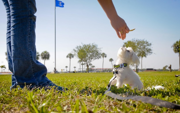 Khaos, the Sexual Assault Prevention and Response therapy dog in-training for the Paw Support Program, completes certification with his trainer at MacDill Air Force Base, Fla., May 9, 2017. Khaos has completed three weeks of full immersion training and has a few additional requirements to complete before he will be qualified to assist sexual assault victims. (U.S. Air Force photo by Senior Airman Mariette Adams)