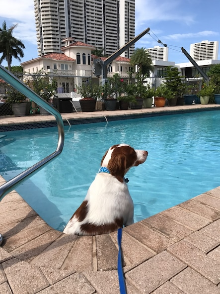 Zues, a foster dog transported by Maj. Ron Johnson, 437th Operations Support Squadron assistant director of operations and C-17 Globemaster III pilot, as part of Pilots N' Paws, sits in a pool in Jacksonville, Fl.