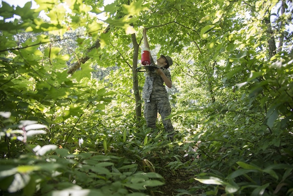U.S. Air Force Airman 1st Class Morgan Boyd, 35th Aerospace Medicine Squadron public health technician, removes a New Jersey Light Trap- Co2 from a tree at Misawa Air Base, Japan, July 13, 2017. The process of trapping and sorting through insects that are caught can be tedious and take days, starting with setting up the traps on day one, removing the traps on day two and sorting and identifying female mosquitos on day three. (U.S. Air Force photo by Senior Airman Brittany A. Chase)