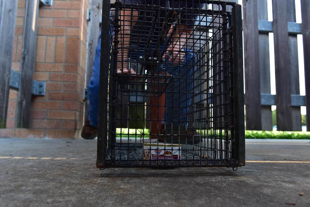 A single-door trap is placed behind a dumpster on Whiteman Air Force Base, Mo., Aug. 2, 2017. The traps are designed to close once an animal enters to eat the bait on the opposite end of the trap. The traps are baited with a bag filled with canned dog or cat food.