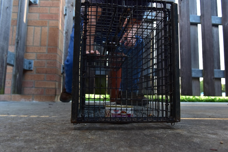 A single-door trap is placed behind a dumpster on Whiteman Air Force Base, Mo.,