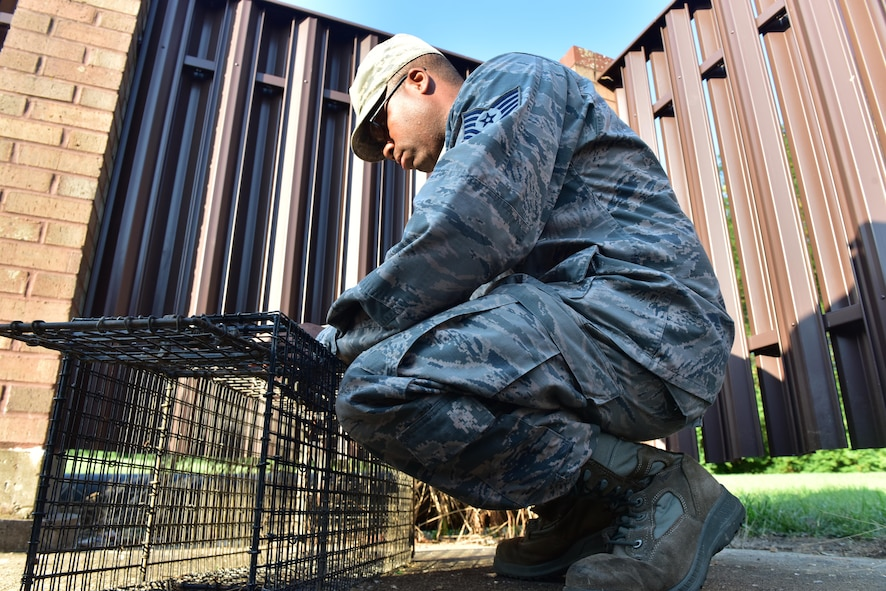 Tech. Sgt. Richard Mauldin, a pest control specialist assigned to the 509th Civil Engineer Squadron, places a single-door trap behind a dumpster on Whiteman Air Force Base, Mo., Aug. 2, 2017.