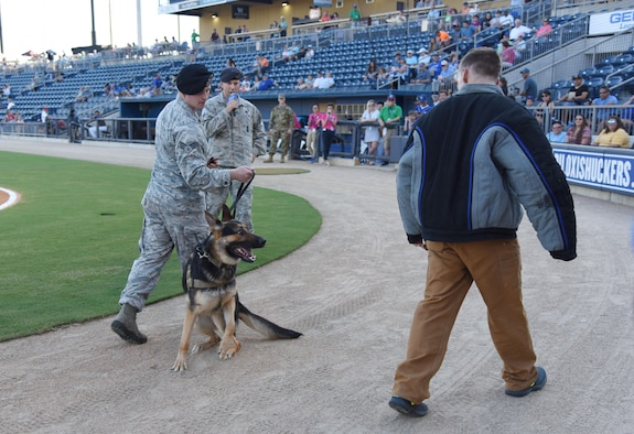 Members of the 81st Security Forces Squadron perform a military working dog demonstration during the Biloxi Shuckers Minor League Baseball team's military appreciation night July 31, 2017, in Biloxi, Miss. The Shuckers recognized and honored service members and their families for serving the nation. (U.S. Air Force photo by Kemberly Groue)