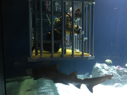 Shark swimming past soldier watching in underwater cage.