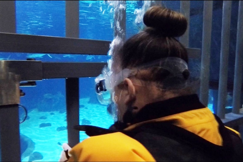 The underwater view of the back of a soldier's head as she looks through a cage into water with sharks swimming.