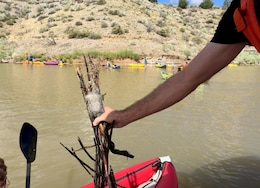 COCHITI LAKE, N.M. – Park ranger Nicholas Parks holds up some branches with a knot of fishing line tangled among them. This is an example of how improperly discarded fishing line can turn into a hazard for the wildlife living in and near the lake.