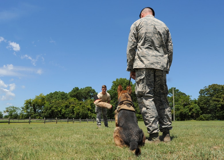 U.S. Air Force Staff Sgt. Jeffrie Kennedy, 633rd Security Forces Squadron military working dog handler prepares to instruct his partner, Toni, 633rd SFS MWD, at Joint Base Langley-Eustis, Va., Aug. 4, 2017.