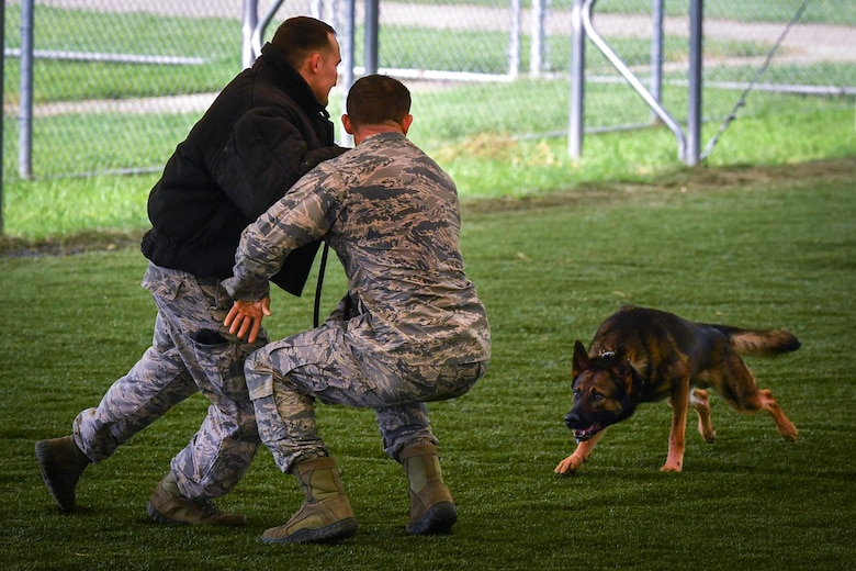 Staff Sgt. Stephen Lammers, 2nd Security Forces Squadron military working dog trainer, simulates an attack toward Senior Airman Jordan Crouse, 2nd SFS MWD handler during a patrol dog certification evaluation at Barksdale Air Force Base, La., Aug. 11, 2017. The evaluation was conducted to upgrade military working dog Hector from a single to a double purpose detector dog status by acquiring a patrol certification