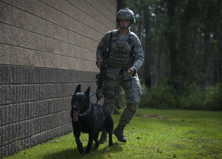 Senior Airman Nicole Meyer, 23d Security Forces Squadron military working dog handler, and MWD Buster, search the perimeter of a building during an emergency response exercise, Aug. 22, 2017, at Moody Air Force Base, Ga. The purpose of this active-shooter exercise was to inspect the recovery phase of an emergency situation while maintaining realism as members still responded as normal. (U.S. Air Force photo by Airman 1st Class Lauren M. Sprunk)