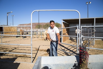 Marine Corps Sgt. Fernando Blanca, a stableman with the Corps' last remaining mounted color guard, mucks out a horse stall at the stables on the Yermo Annex of Marine Corps Logistics Base Barstow, Calif., Aug. 8, 2017. Cleaning stalls, grooming the horses and maintaining the facilities is all in a day's work for the stablemen. Marine Corps photo by Laurie Pearson